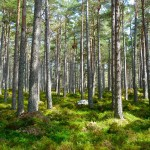 forest-272595_960_720 (1)